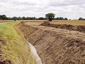 Poorly draining, clay-rich soils on the till plateau of South Norfolk.(© Tim Holt-Wilson)